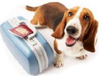 Что нужно знать о путешествиях с домашними животными?