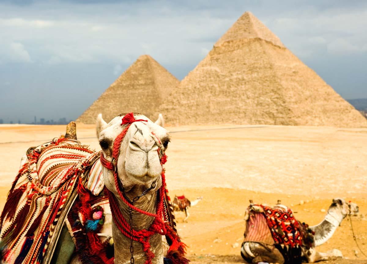 Осенью возможно падение цен на Египет